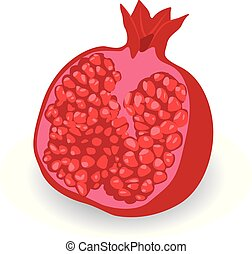 Half of Pomegranate vector illustration