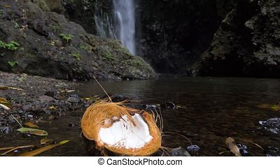Half of the coconut in the jungle, on the coast of the river...