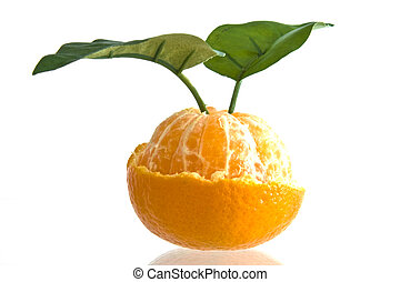 Half-peeled Clementine orange with two leaves on white...
