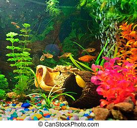 halfajták, különböző, akvárium, fajok