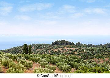 halkidiki, landscape