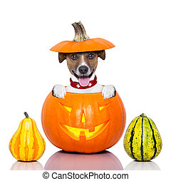 halloween, 개