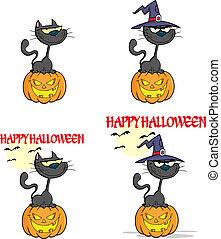 Halloween Black Cat Collection Set