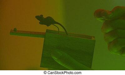 Halloween box mouse.