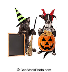 Halloween Cat and Dog Blank Chalkboard - Cute crossbreed dog...