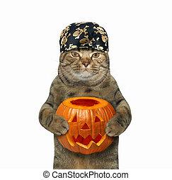 Halloween cat holding pumpkin