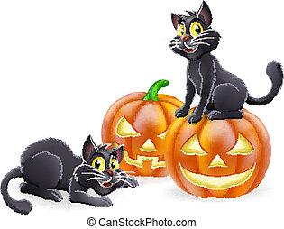 Halloween cats and pumpkins