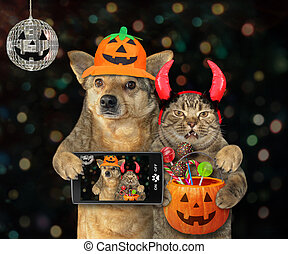 halloween, chat, chien, marques, selfie