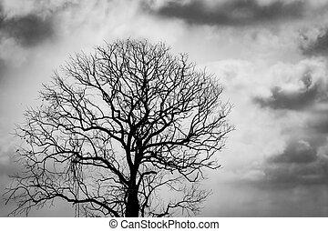 halloween, död, trist, hopplös, träd., silhuett, concept., avlövada, sky, bakgrund., mörk, dramatisk, bakgrund, death., feel., dag, skrämmande, skyn, klagovisa, deprimerat, träd, förtvivlan, eller