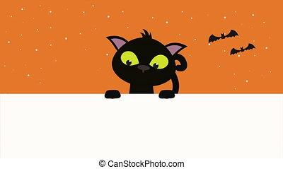 halloween dark scene with cat and bats flying ,4k video ...