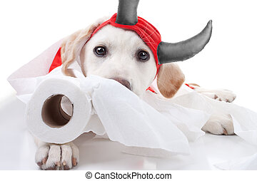 Halloween Devil Dog - Funny guilty Labrador retriever puppy...