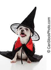 Halloween dog - A scary evil dog witch or wizard wearing a...