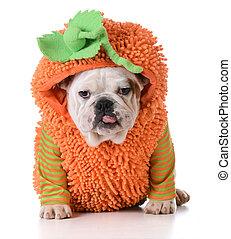 halloween dog - halloween puppy - english bulldog puppy...