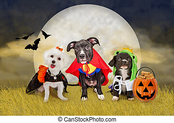 Three cute little puppy dogs dressed in Halloween costumes sitting in a field at night