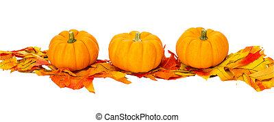 halloween, freigestellt, erntedankfestdekoration, herbst, weißes, oder