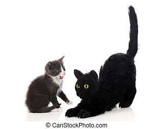 An adorable gray kitten hissing a a big, black stuffed Halloween cat. Isolated on white.