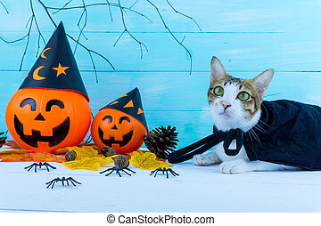 Halloween holiday background with spider, webs, cat and jack lantern on blue wooden table with copy space for text. Flat lay, top view