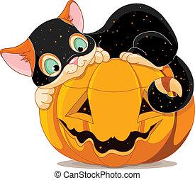 Halloween kitten - A cute kitten with Halloween costume, ...