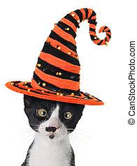 Halloween kitten - Cross eyed kitten wearing a Halloween...