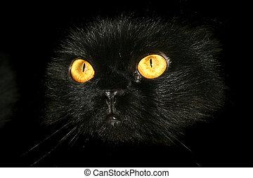 Spooky Eyes - Black Cat