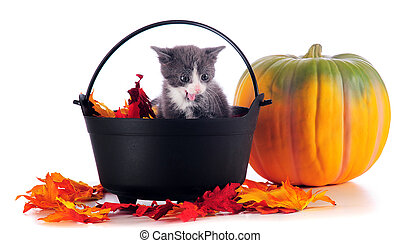 An adorable gray kitten in a cauldron filled and surrounded by colorful leaves near a pumpkin. Isolated on white.