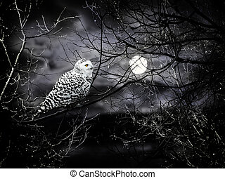 Halloween night theme with moon and owl against cloudy dark...