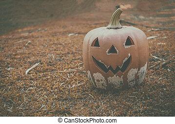 Halloween of pumpkin on the orange Lawn
