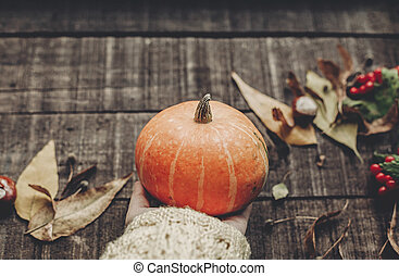 halloween or thanksgiving concept greeting card. hand in sweater holding pumpkin with leaves and berries on rustic wooden background, top view. space for text. cozy autumn mood