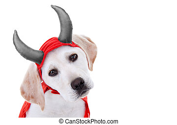 halloween, perro, disfraz