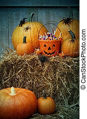 halloween, potirons, seau, rempli, bonbon