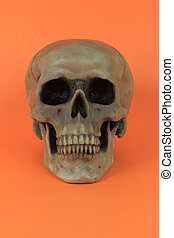 Picture of prop for the popular North American Holiday Halloween. Human Skull, over orange, background - vertical orientation.