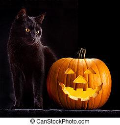 halloween pumpkin and cat - Halloween pumpkin and black cat...