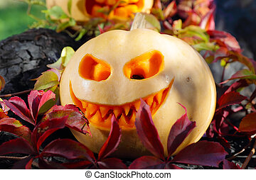 Halloween pumpkin in autumn leaves