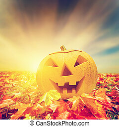Halloween pumpkin in fall, autumn leaves