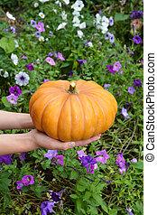 Halloween Pumpkin in hands. Young woman holding a pumpkin in her hands.