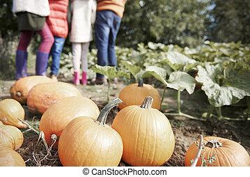 Halloween pumpkin in the field