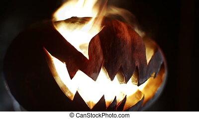Halloween pumpkin. Looped