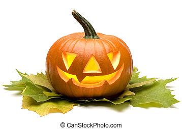 pumpkin - halloween pumpkin on leaves close up on white