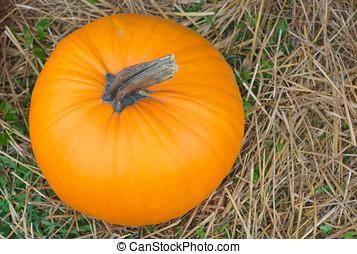 halloween pumpkin on straw top view