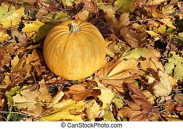 Halloween. Pumpkin