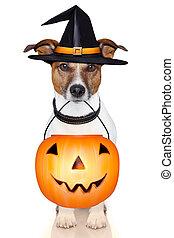 halloween pumpkin witch dog - halloween trick or treat...