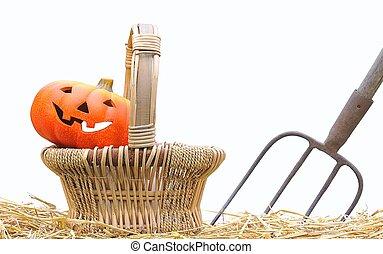 Halloween pumpkins on the farm.