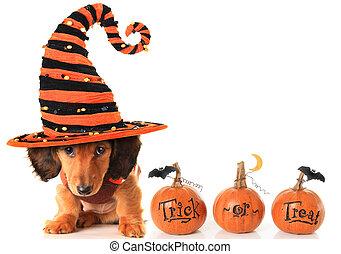 Halloween puppy - Halloween dachshund puppy wearing a...
