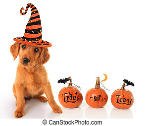 Halloween puppy - Cute puppy wearing a Halloween witch hat...