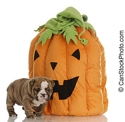 halloween puppy with pumpkin