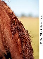 hals, horse.
