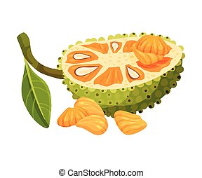 Halved Elliptical Jackfruit with Green Seed Coat and Fibrous...
