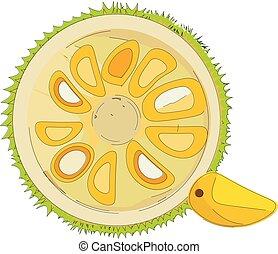 Halved jackfruit , vector or color illustration - Jackfruit...