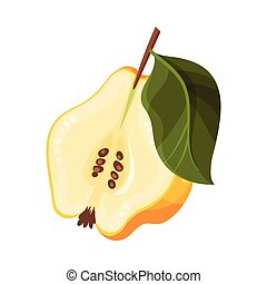 Halved Quince Showing Light Flesh with Seeds Vector ...