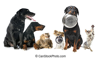 hambriento, mascotas